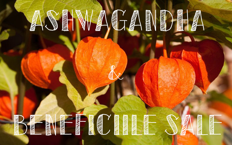 Ashwagandha / Healthy eating with Lili Sandu / lilisandu.ro